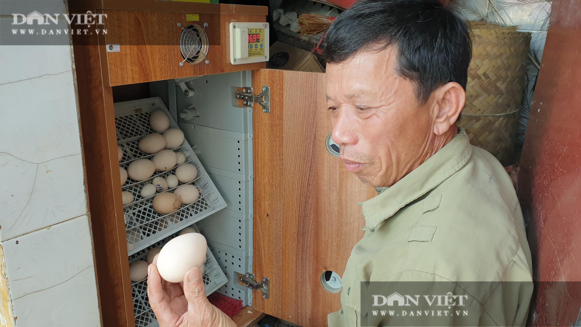 Nam Định: Nuôi đủ loại chim quý hiếm, lão nông đút túi trăm triệu mỗi năm. - Ảnh 6.