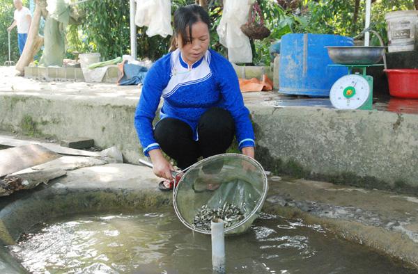 Nữ nông dân thu hàng tỷ đồng nhờ nuôi cá tiến vua - Ảnh 3.