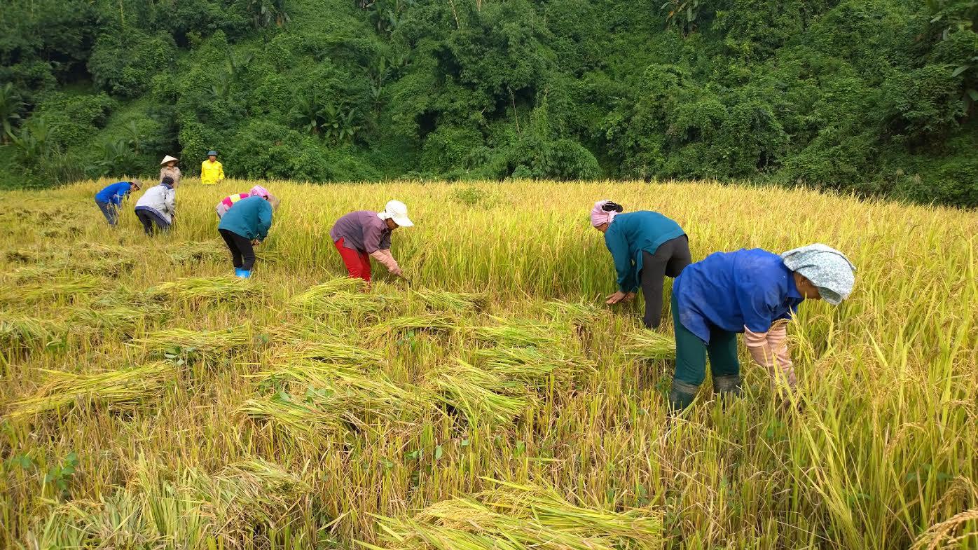 Hộ nông dân nghèo, cận nghèo được hỗ trợ 90% phí bảo hiểm nông nghiệp - Ảnh 1.