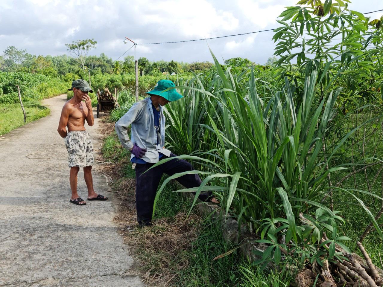 Quảng Nam: Kênh thủy lợi hàng trăm triệu đồng chỉ để chứa rác, trồng cỏ cho bò - Ảnh 5.