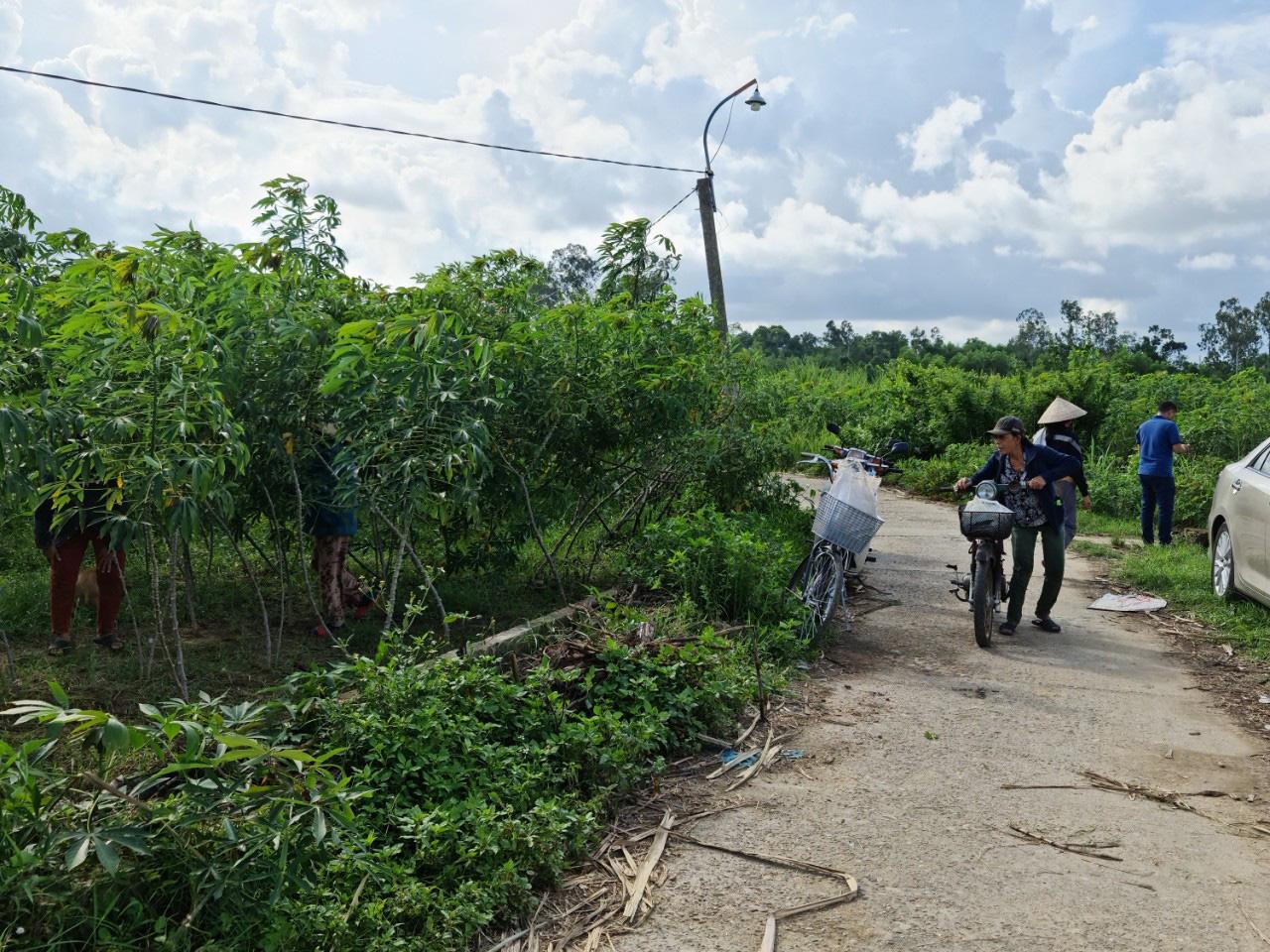Quảng Nam: Kênh thủy lợi hàng trăm triệu đồng chỉ để chứa rác, trồng cỏ cho bò - Ảnh 2.