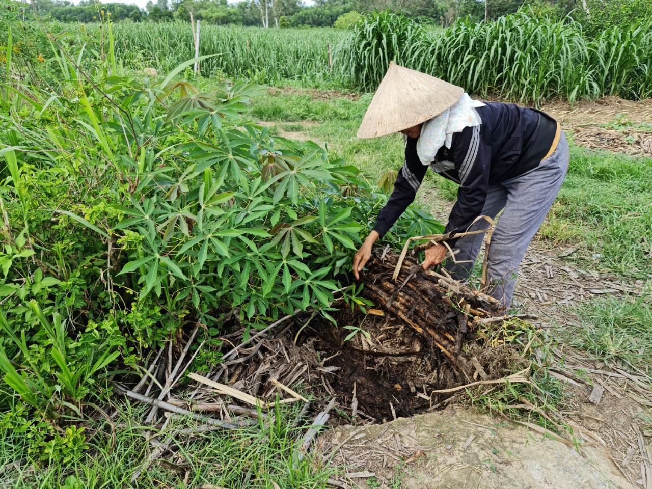 Quảng Nam: Kênh thủy lợi hàng trăm triệu đồng chỉ để chứa rác, trồng cỏ cho bò - Ảnh 3.
