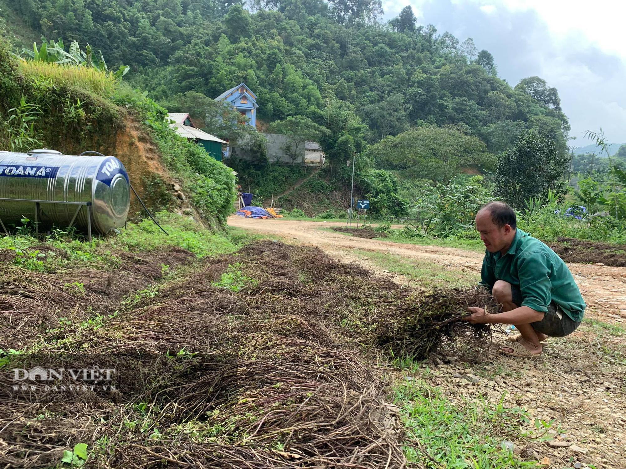 """Chỉ cần có mưa, người nông dân sẽ """"hái"""" ra tiền từ thứ cây này - Ảnh 5."""