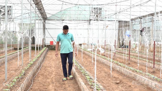 """3 năm đi làm cửu vạn không ăn thua, về nhà trồng dưa lưới thu 65 tấn quả """"hết veo trong 1 nốt nhạc"""" - Ảnh 7."""