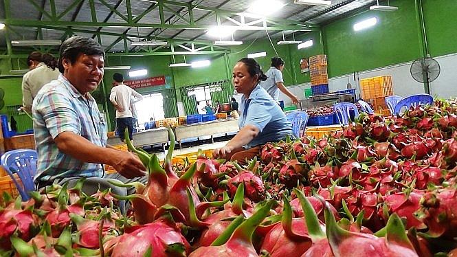 Giá nhiều loại trái cây đồng loạt tăng cao kỷ lục - Ảnh 1.