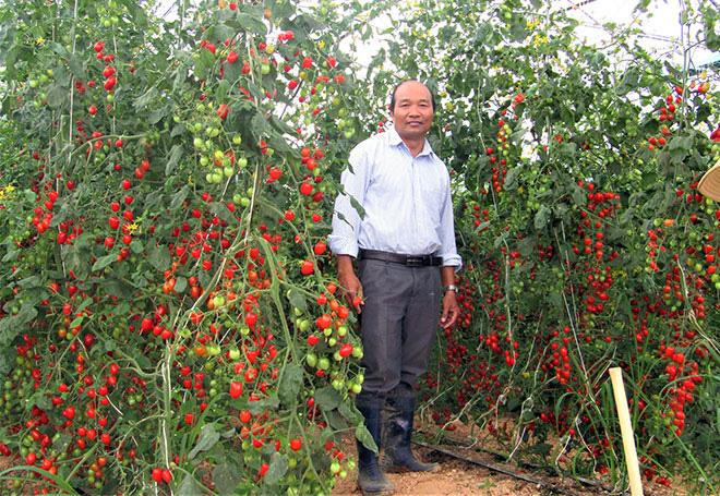 Người tiên phong làm rau đạt chuẩn quốc tế Global GAP - Ảnh 1.