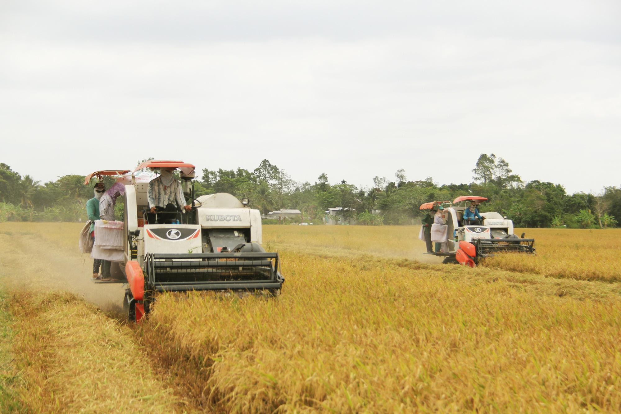 Giá lúa gạo đứng ở mức cao, nông dân thu lợi nhuận kỷ lục - Ảnh 3.