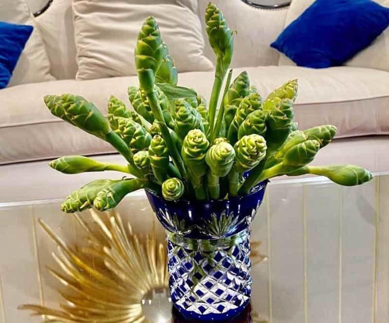 Hoa màu xanh trên núi cao cắm đẹp, ăn ngon: Gom tiền triệu mỗi ngày - Ảnh 2.