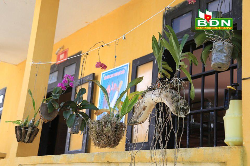 Tuyệt vời những vườn phong lan vươn mình giữa gió mặn ở quần đảo Trường Sa - Ảnh 2.