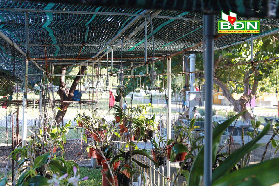 Tuyệt vời những vườn phong lan vươn mình giữa gió mặn ở quần đảo Trường Sa - Ảnh 7.