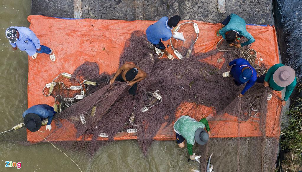 Giá cá tra lao dốc, người nuôi lỗ nặng - Ảnh 8.