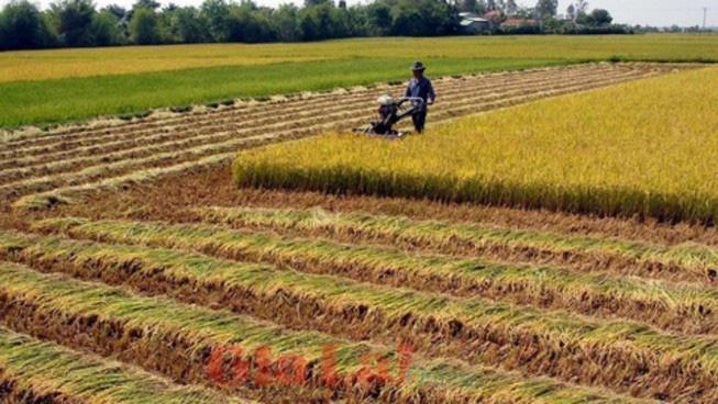 3 trường hợp không được sang tên Sổ đỏ đất trồng lúa năm 2020 - Ảnh 1.