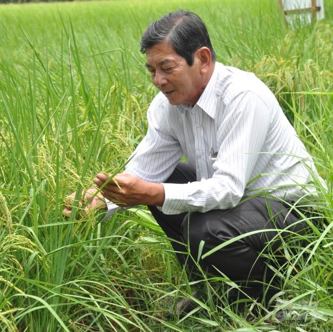 'Cha đẻ' gạo ST25 vẫn âm thầm nâng tầm gạo Việt - Ảnh 1.