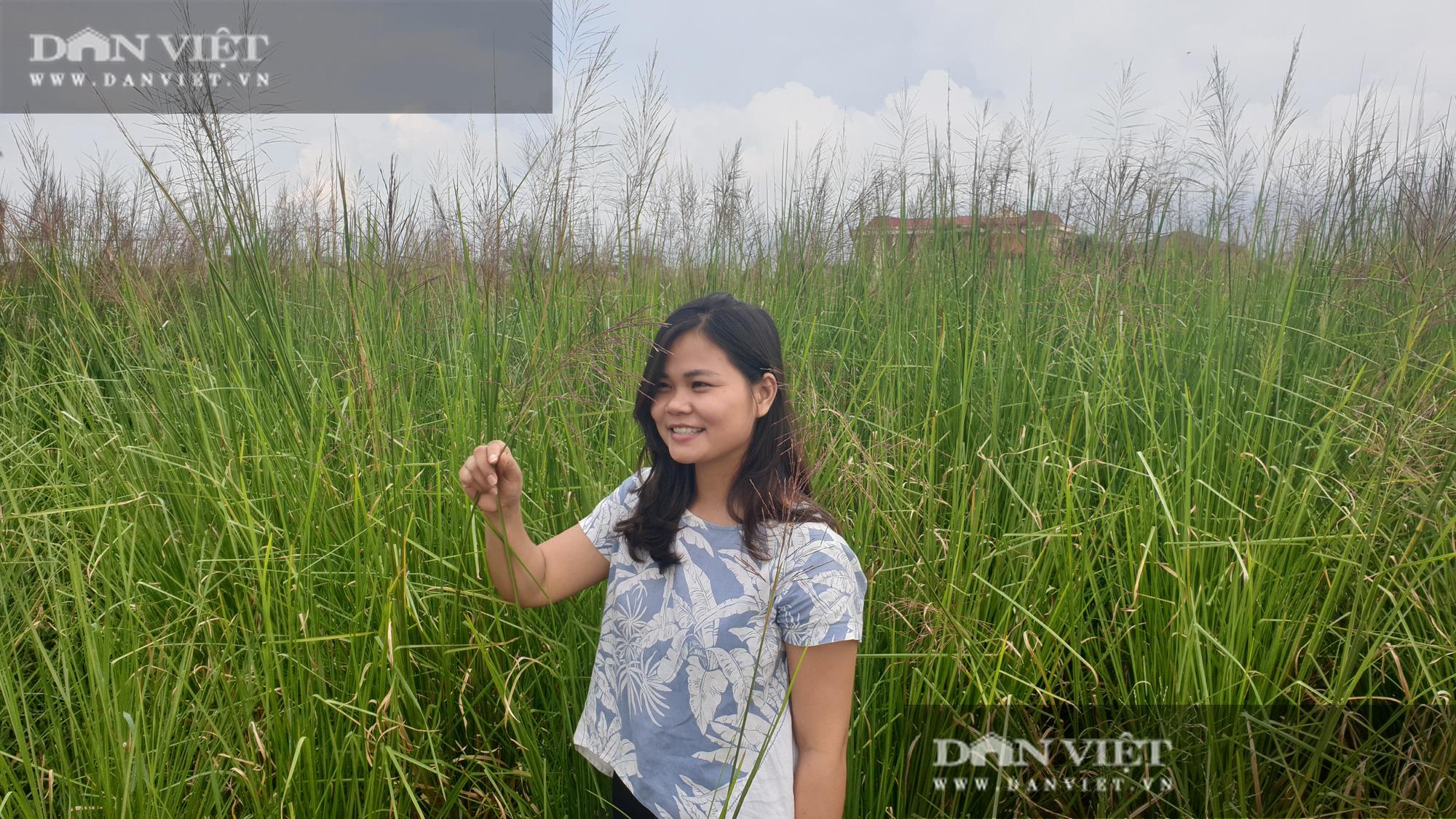 Ninh Bình: Bỏ việc lương cao về quê trồng loại cỏ lạ, cô gái 9x có thu nhập khủng - Ảnh 1.
