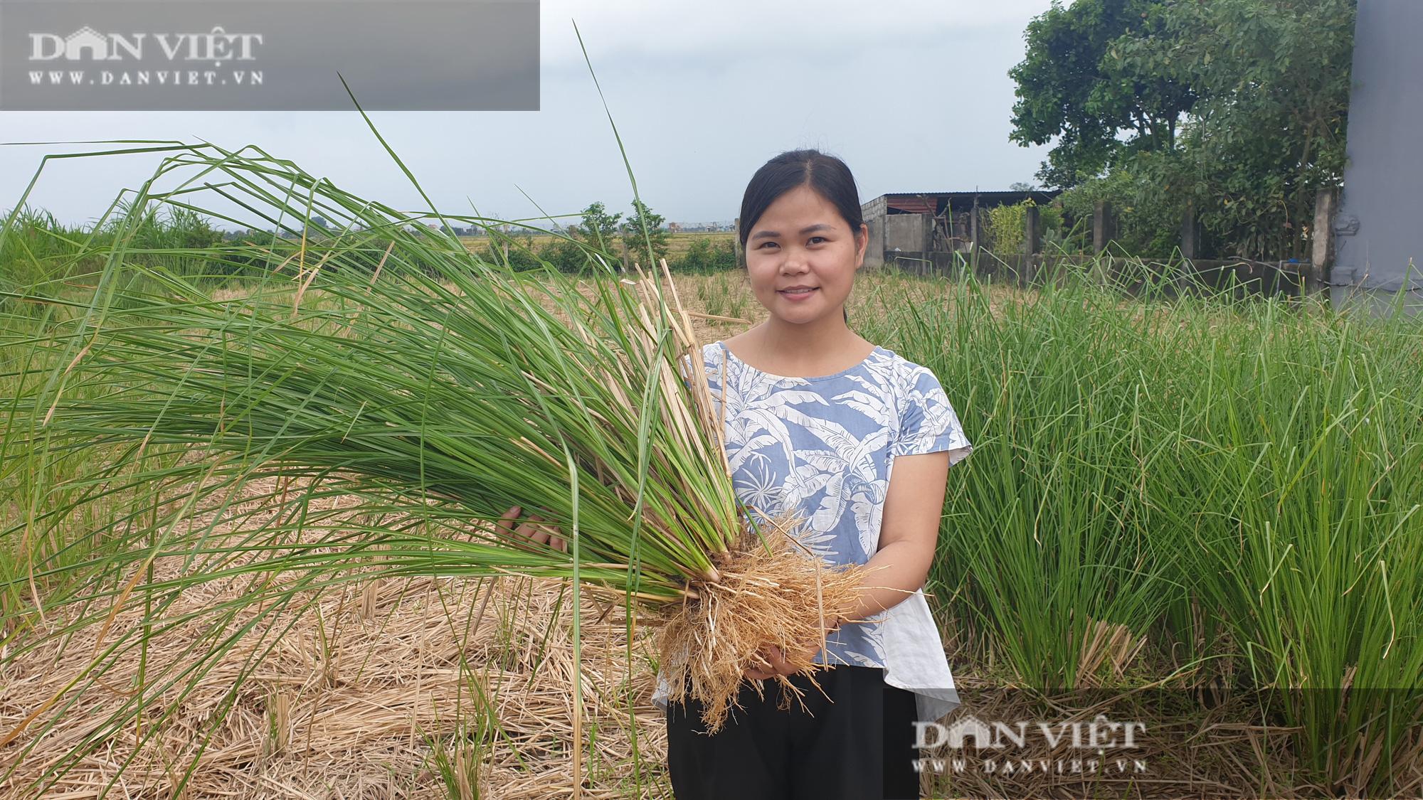 Ninh Bình: Bỏ việc lương cao về quê trồng loại cỏ lạ, cô gái 9x có thu nhập khủng - Ảnh 5.