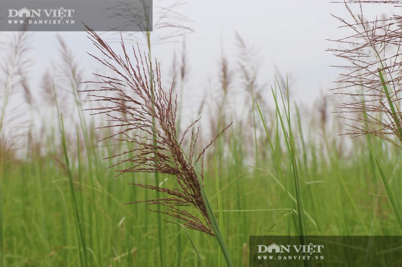 Ninh Bình: Bỏ việc lương cao về quê trồng loại cỏ lạ, cô gái 9x có thu nhập khủng - Ảnh 3.