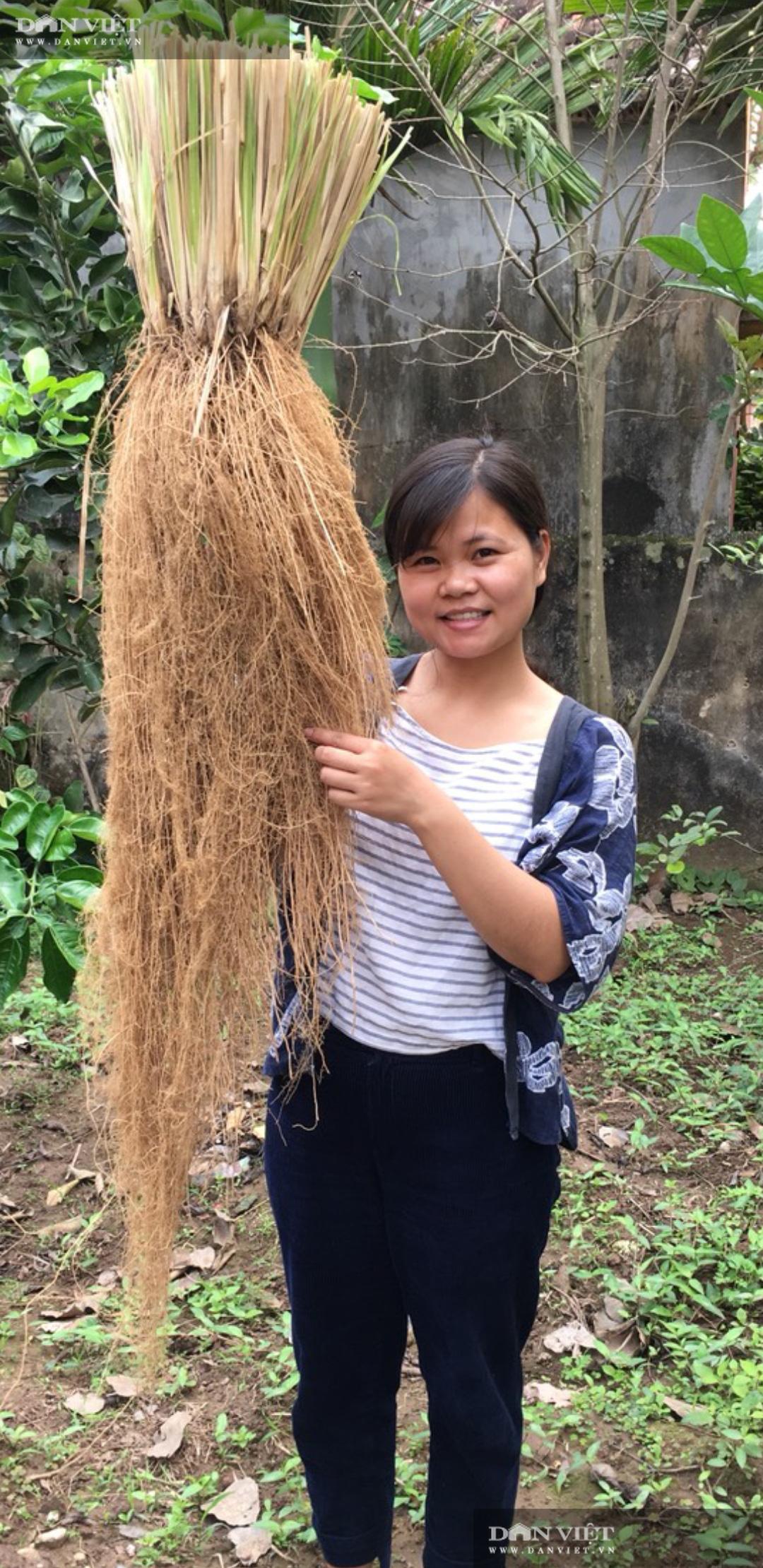 Ninh Bình: Bỏ việc lương cao về quê trồng loại cỏ lạ, cô gái 9x có thu nhập khủng - Ảnh 2.