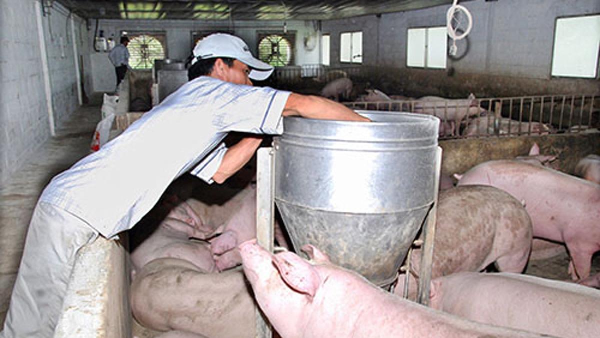 Nhiều chính sách ưu đãi đón làn sóng đầu tư vào nông nghiệp - Ảnh 2.