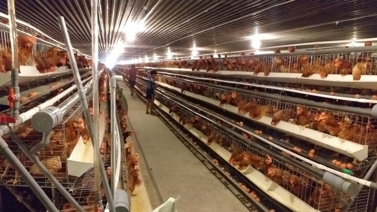 Nhiều chính sách ưu đãi đón làn sóng đầu tư vào nông nghiệp - Ảnh 1.