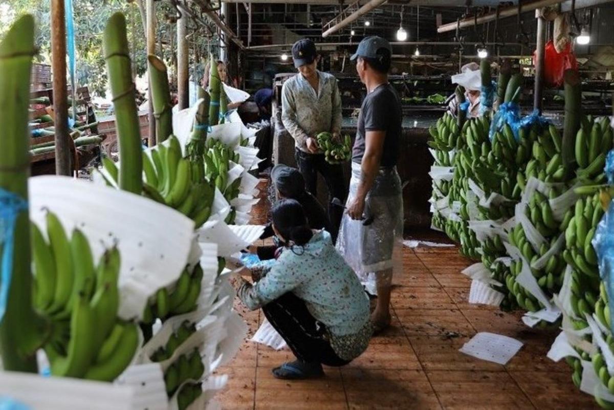 Quảng Ngãi phát triển nông nghiệp theo hướng sản xuất hàng hóa - Ảnh 2.