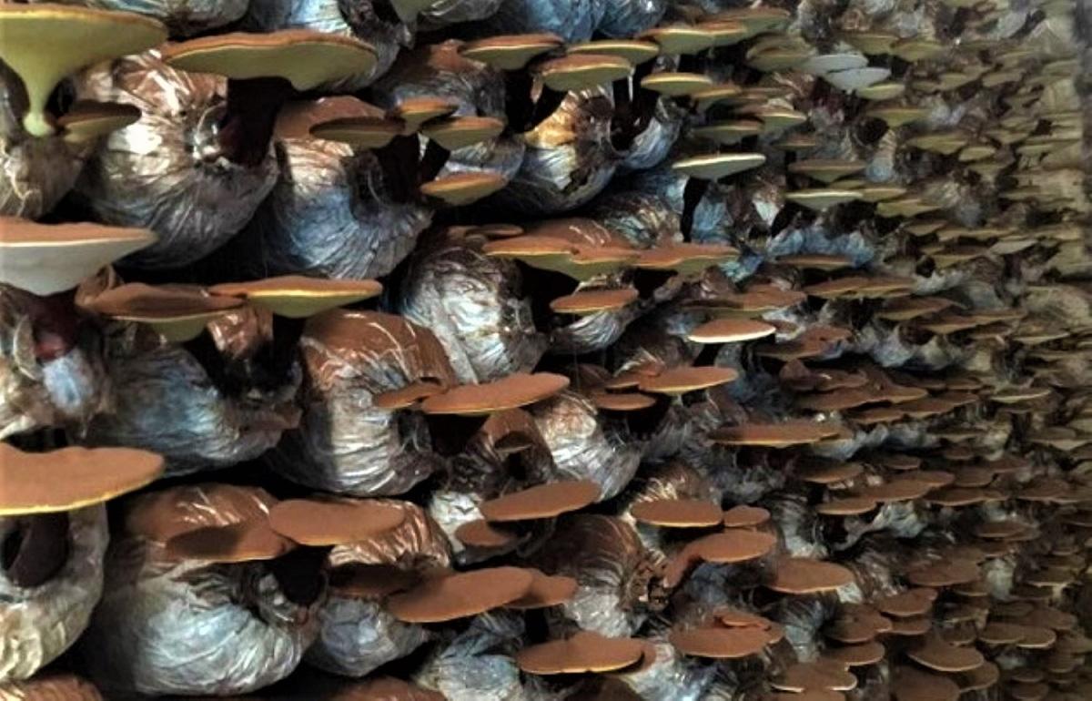 Quảng Ngãi phát triển nông nghiệp theo hướng sản xuất hàng hóa - Ảnh 3.
