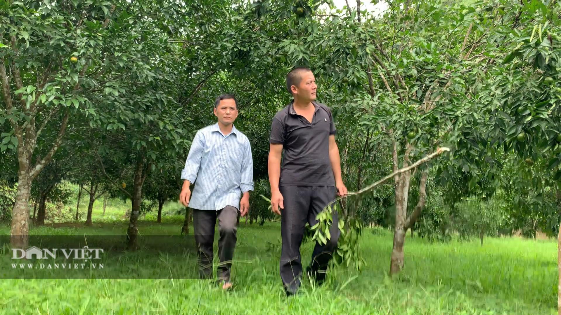 Mạnh dạn trồng cây có múi, nông dân này thu hơn 200 triệu đồng mỗi vụ - Ảnh 2.