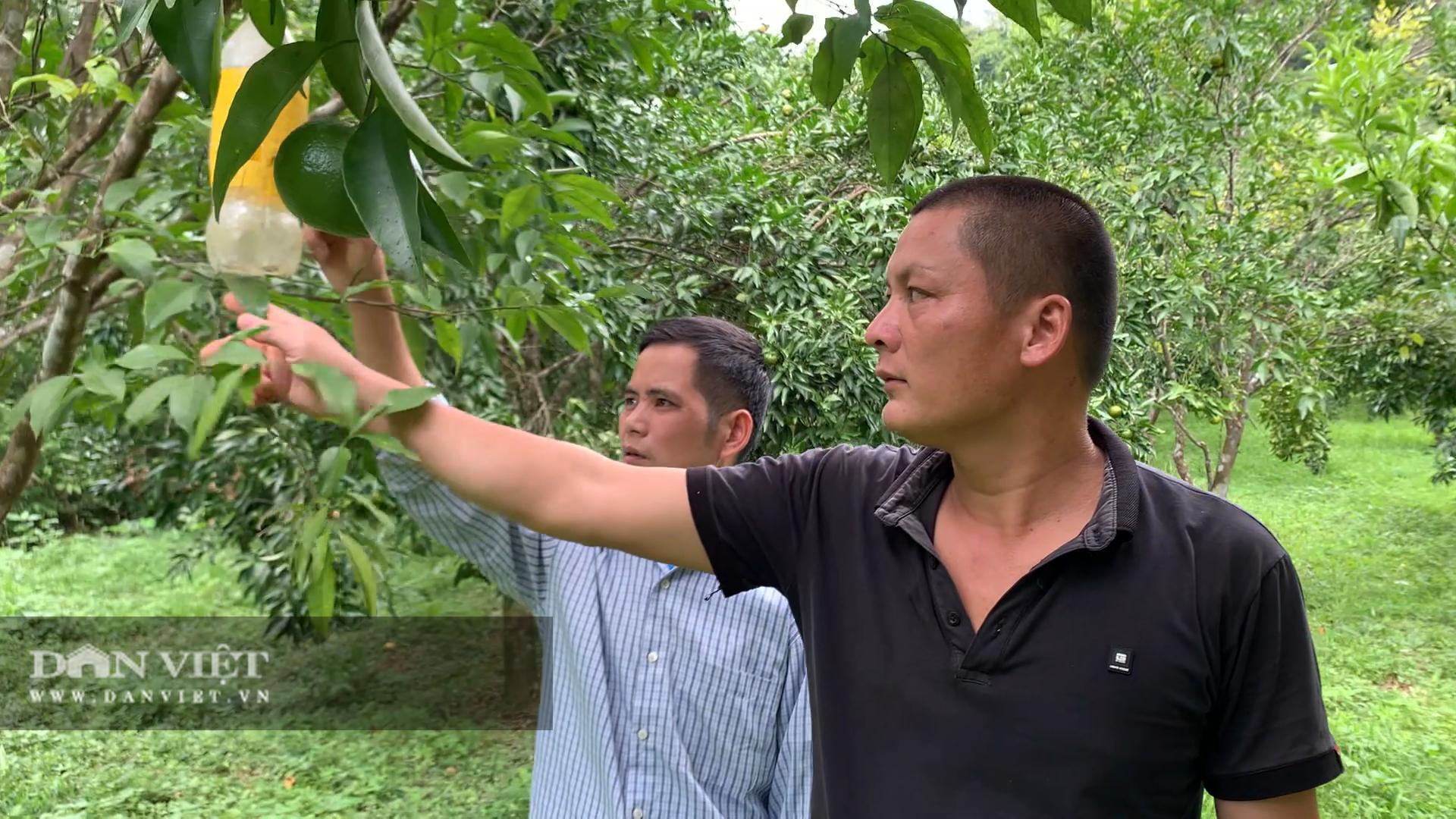 Mạnh dạn trồng cây có múi, nông dân này thu hơn 200 triệu đồng mỗi vụ - Ảnh 3.