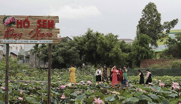 Bình Định: Sen nở trái mùa, thấy lạ bao nhiêu người đến xem và chụp ảnh - Ảnh 1.