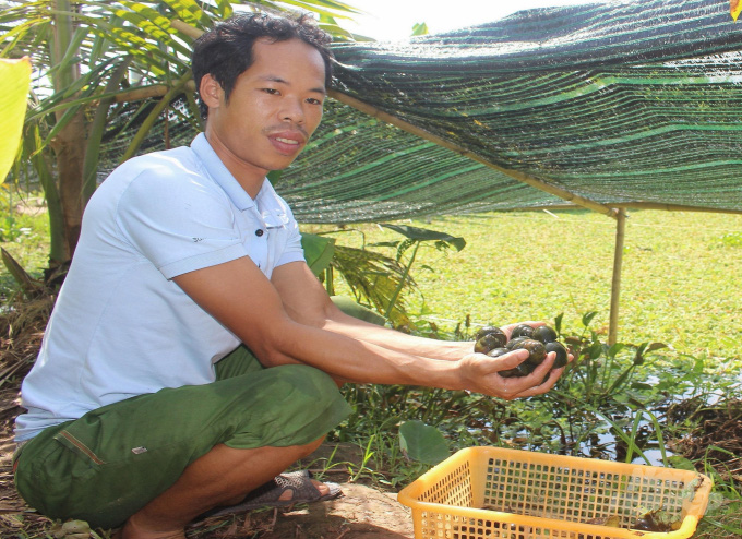 Nam Định: Kiếm hàng trăm triệu từ nuôi ốc nhồi - Ảnh 1.