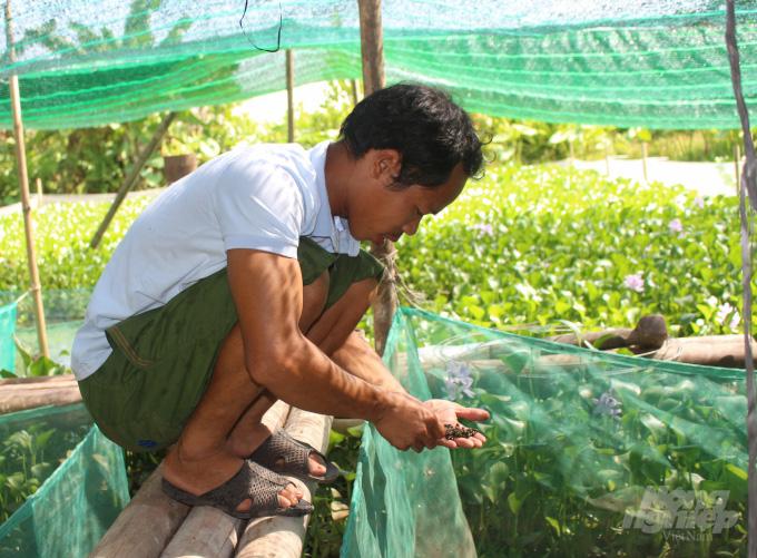 Nam Định: Kiếm hàng trăm triệu từ nuôi ốc nhồi - Ảnh 2.
