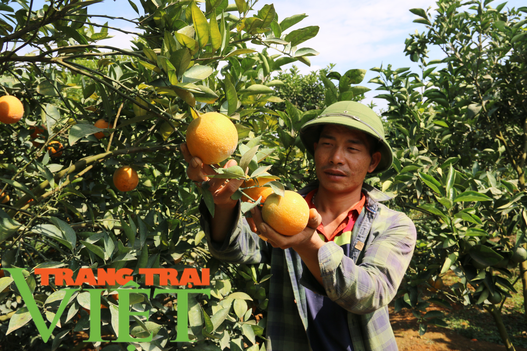 """""""Phao cứu sinh"""" giúp người Thái vùng cao thoát nghèo - Ảnh 4."""