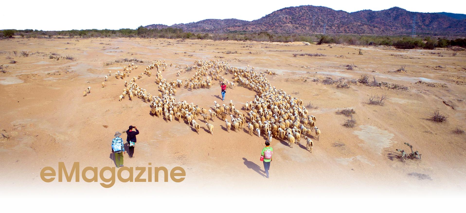 Nhiều tỉnh đã nuôi được cừu, nhưng nuôi bán thịt thì chỉ có tỉnh nào? - Ảnh 15.