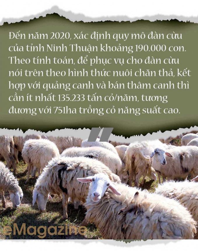 Nhiều tỉnh đã nuôi được cừu, nhưng nuôi bán thịt thì chỉ có tỉnh nào? - Ảnh 12.