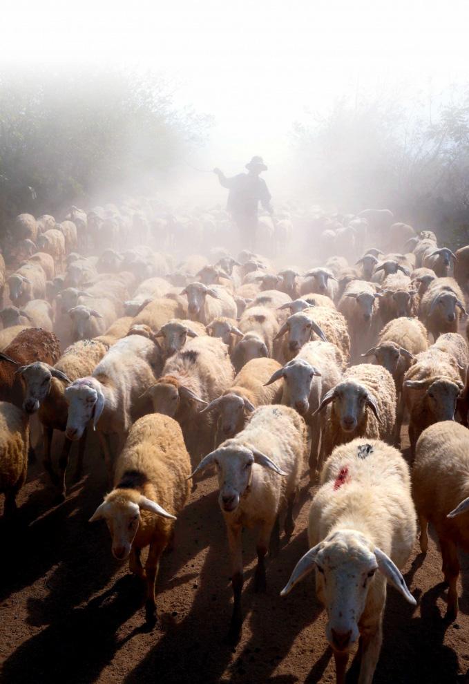 Nhiều tỉnh đã nuôi được cừu, nhưng nuôi bán thịt thì chỉ có tỉnh nào? - Ảnh 10.
