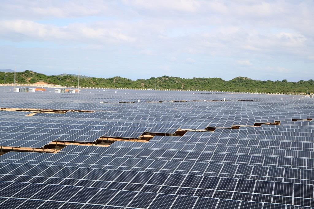 Ninh Thuận sẽ trồng cỏ, nuôi bò dưới những tấm pin năng lượng mặt trời như thế nào? - Ảnh 2.