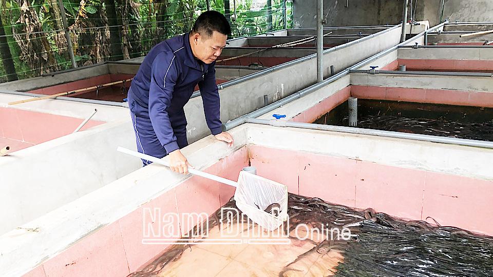 Nam Định: Bỏ phố về quê nuôi lươn không bùn dày đặc trong bể xi măng, cứ bán 1 bể lươn lời 40 triệu - Ảnh 1.