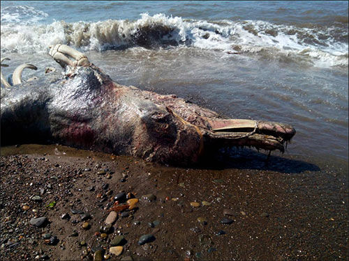 9 loài thủy quái có thật kinh hoàng nhất thế giới: Có 1 ở Việt Nam - Ảnh 10.