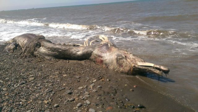 9 loài thủy quái có thật kinh hoàng nhất thế giới: Có 1 ở Việt Nam - Ảnh 11.