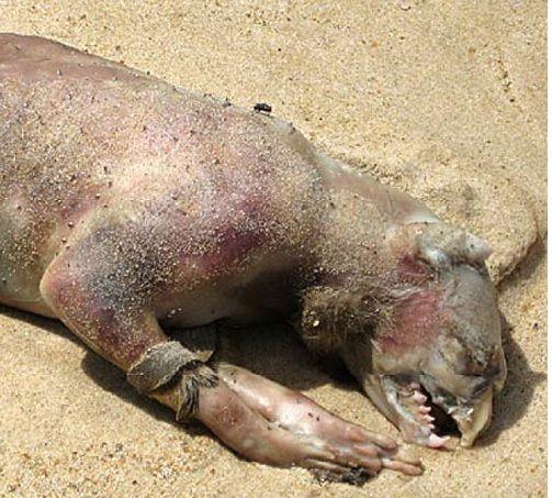 9 loài thủy quái có thật kinh hoàng nhất thế giới: Có 1 ở Việt Nam - Ảnh 5.