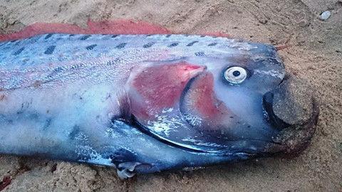 9 loài thủy quái có thật kinh hoàng nhất thế giới: Có 1 ở Việt Nam - Ảnh 8.