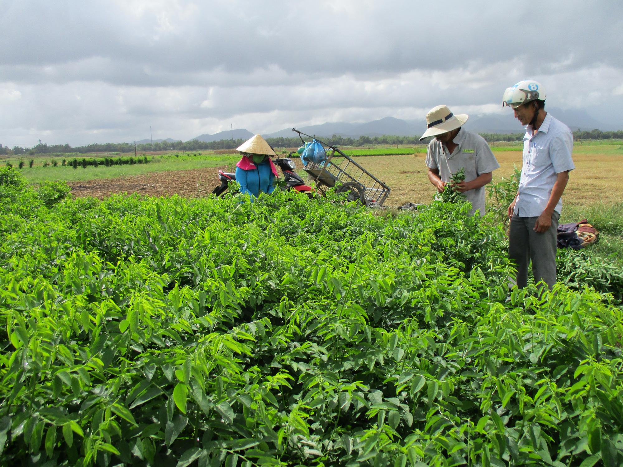 Quảng Nam: Hội Nông dân thị xã Điện Bàn - Trang bị kiến thức cho nông dân làm giàu - Ảnh 2.