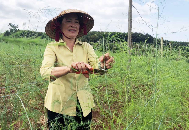 """Gia Lai: Trồng 4 loài cây và nuôi 1 thứ con, tưởng nuôi trồng """"lung tung"""", nào ngờ bà nông dân này thu tiền tỷ - Ảnh 1."""