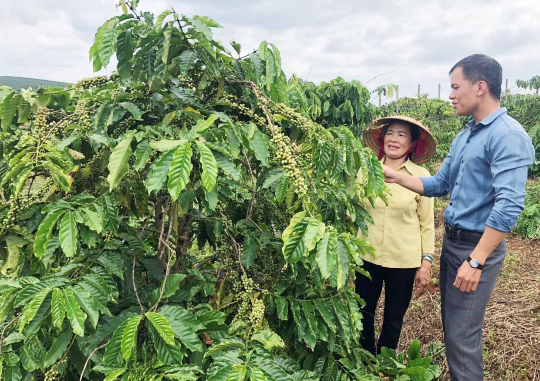 """Gia Lai: Trồng 4 loài cây và nuôi 1 thứ con, tưởng nuôi trồng """"lung tung"""", nào ngờ bà nông dân này thu tiền tỷ - Ảnh 3."""