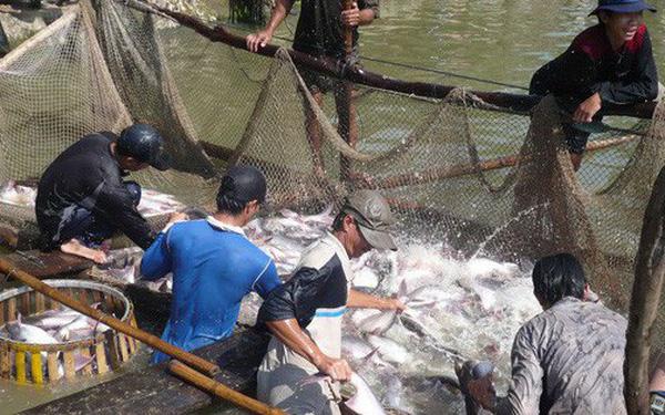 130 doanh nghiệp xuất khẩu cá tra mang về gần 400 triệu USD từ thị trường Trung Quốc - Ảnh 3.