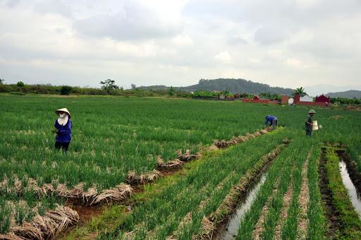 3 nhóm đối tượng được miễn thuế sử dụng đất nông nghiệp năm 2020 - Ảnh 1.