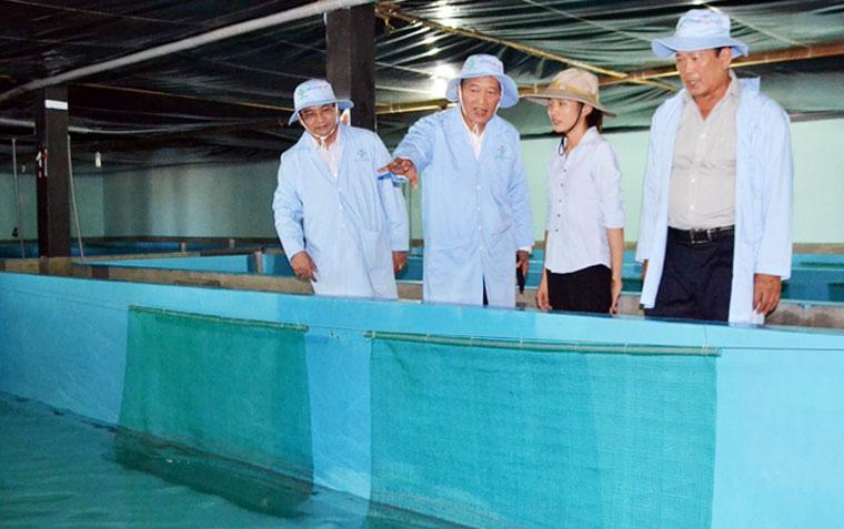 Thủy sản Đắc Lộc đưa tôm hùm vào bờ nuôi - Ảnh 4.