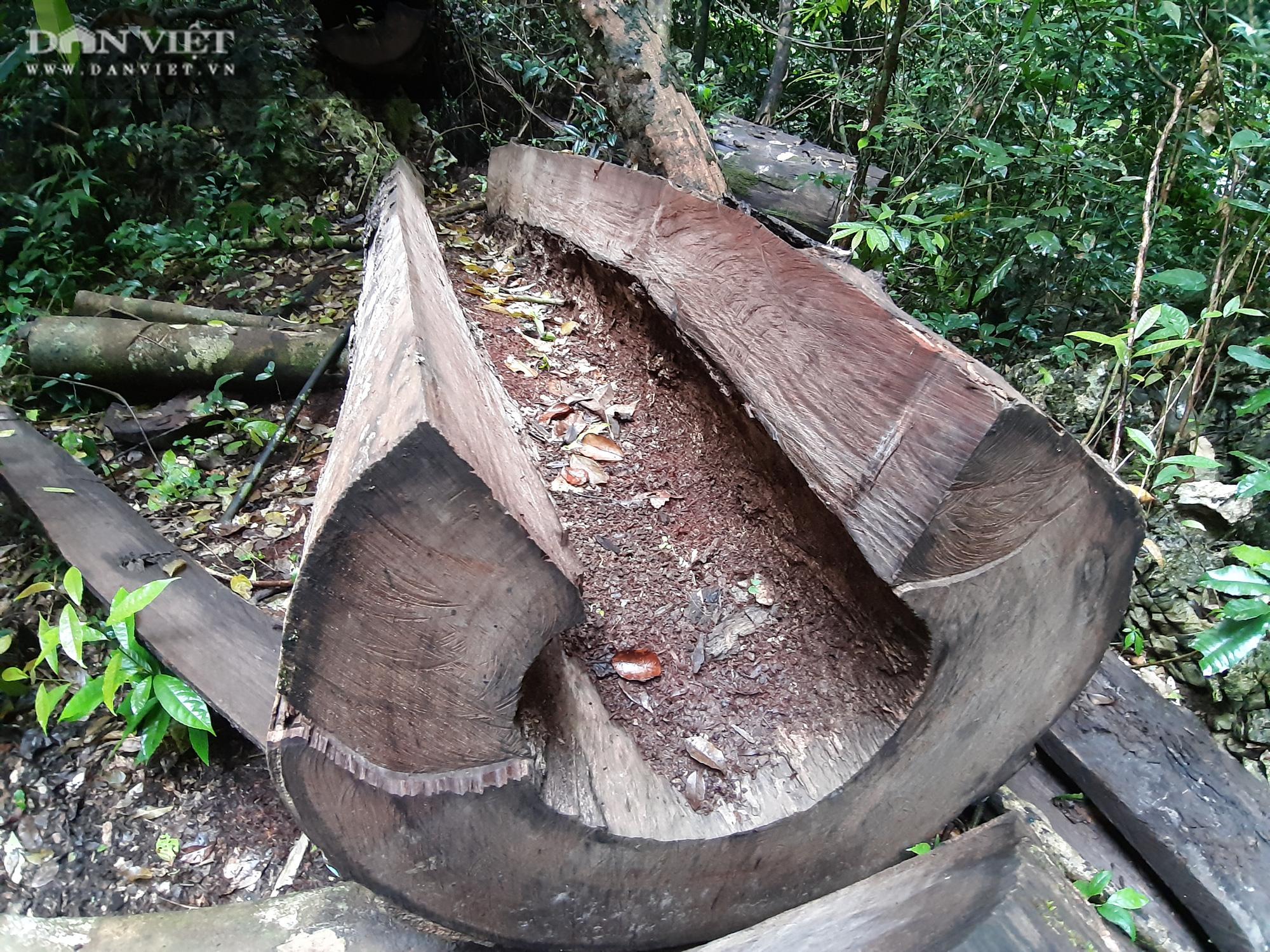 Lời man trá trong các rừng nghiến khổng lồ: Tận mục những cánh rừng tàn sát! - Ảnh 5.