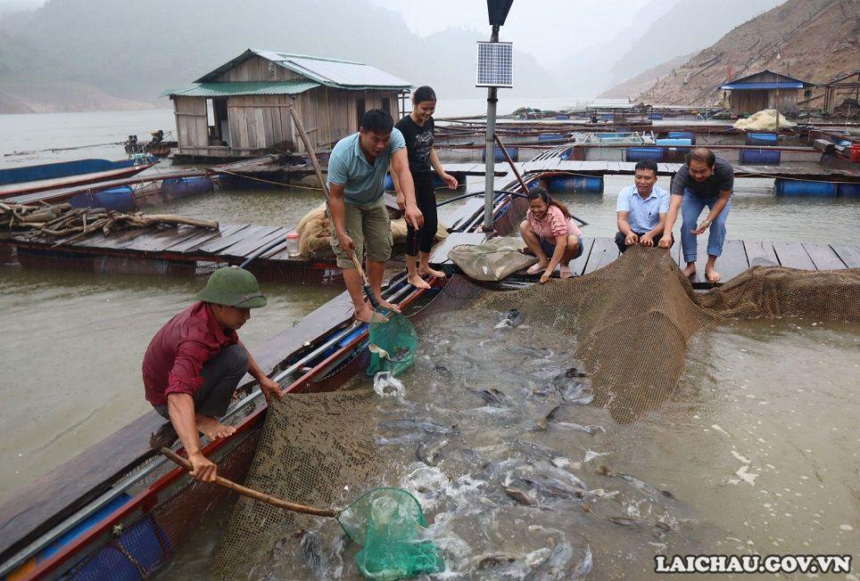 """Lai Châu: Một ông tỷ phú nông dân thuần hóa và nuôi thành công loài """"thủy quái"""" ở thượng nguồn sông Đà - Ảnh 1."""
