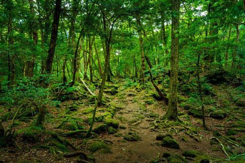 Khu rừng tự sát Aokigahara và những câu chuyện rùng rợn - Ảnh 1.