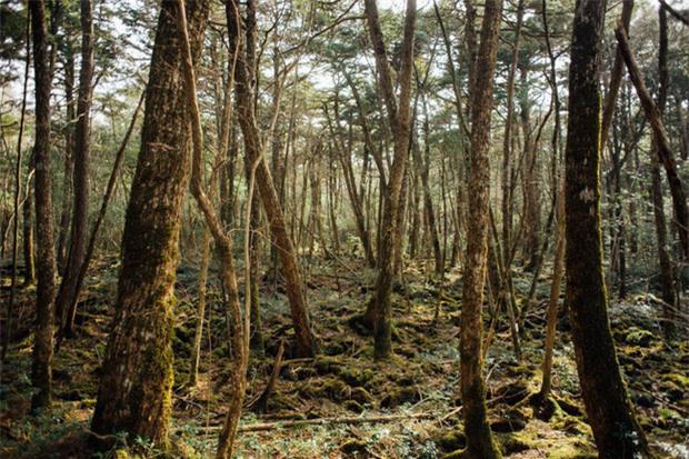 Khu rừng tự sát Aokigahara và những câu chuyện rùng rợn - Ảnh 2.